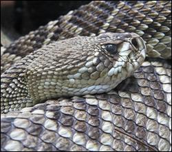 snake removal Irving